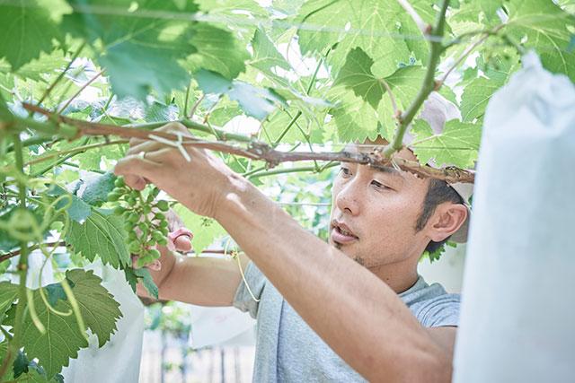 大阪で一緒に農業しませんか?
